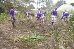 foto articolo kenyagiusta
